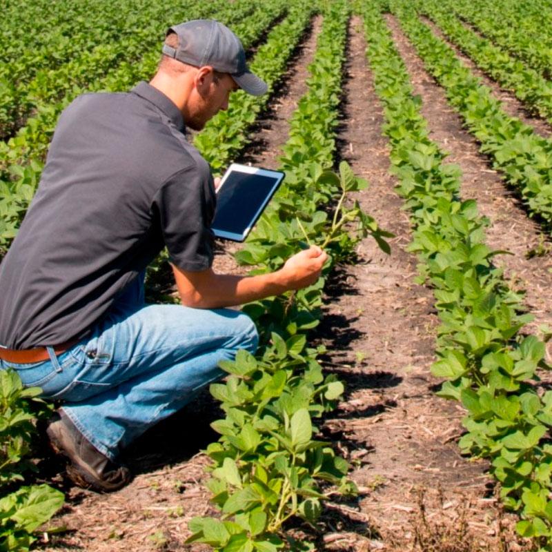 ¿Dónde estudiar agronomía en Chile?